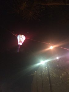 大島緑道公園の夜桜の写真