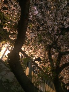 亀戸の歩道橋から見た夜桜の写真